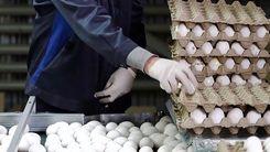 قیمت تخم مرغ بازهم گران شد / علت گرانی چیست ؟