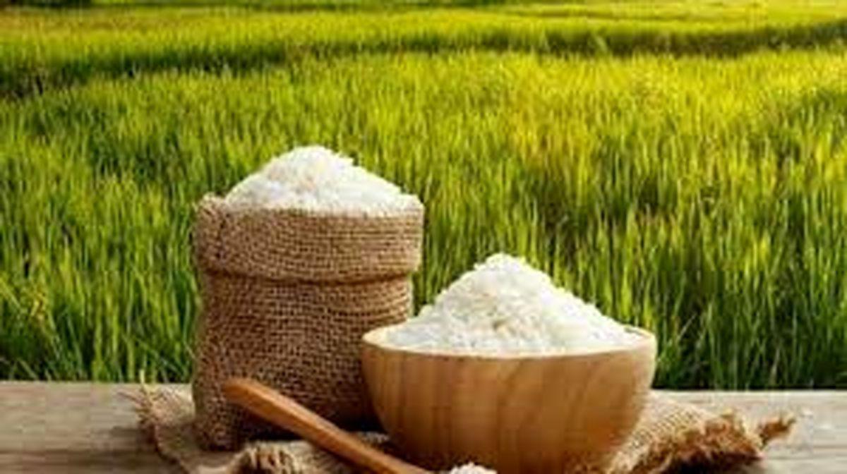 قیمت برنج در شمال پایین آمد| در تهران گران شد!