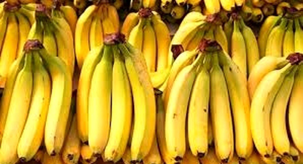 قیمت موز کاهش پیدا کرد + جدول قیمت میوه