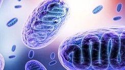 علائم قارچ سیاه چیست ؟ / این بیماری عفونی خطرناک را بشناسید