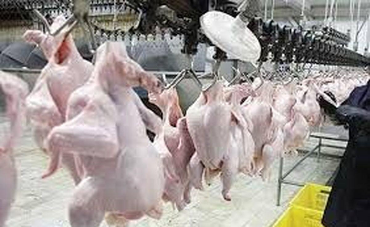 قیمت مرغ امروز  29 آذر 99 در بازار چگونه است ؟ + جزئیات