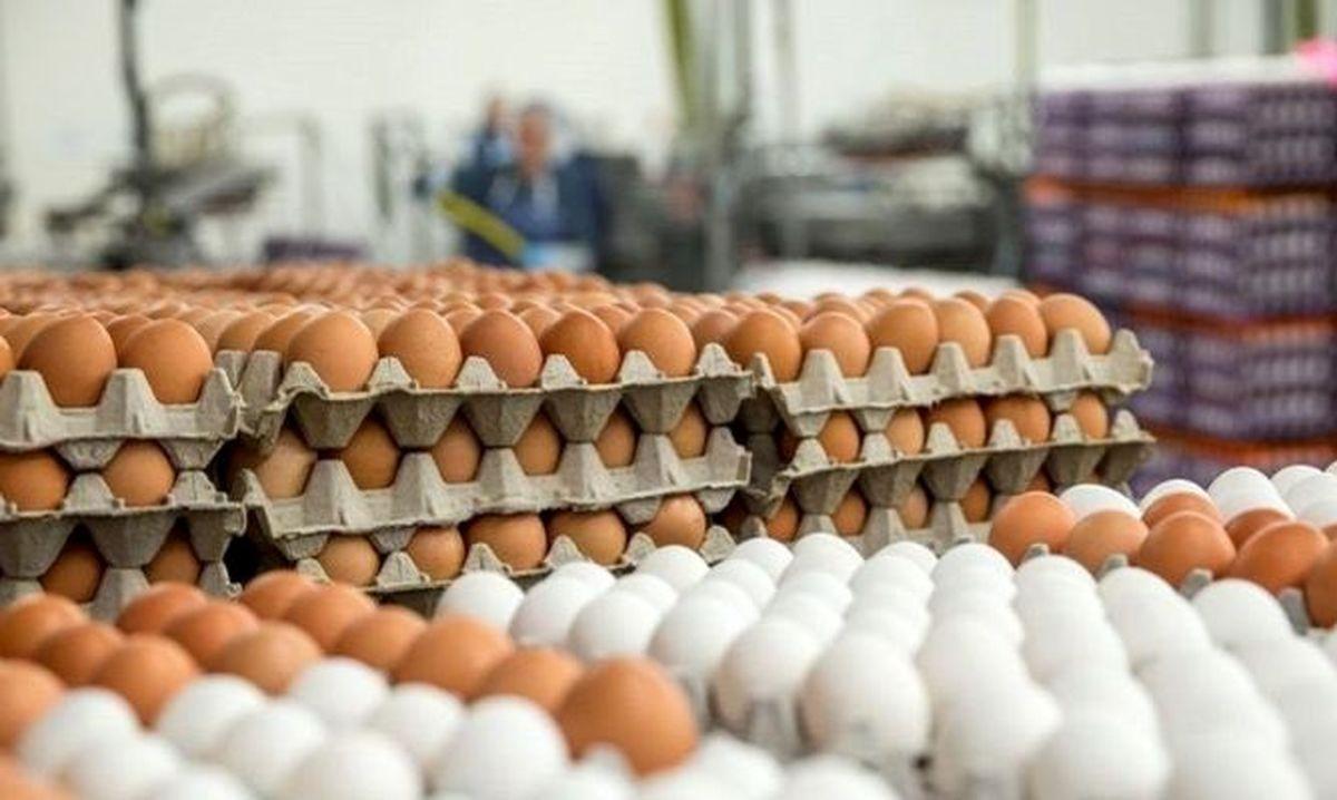 پشت پرده دو نرخی شدن مرغ / توضیح رئیس اتحادیه فروشندگان چه بود؟