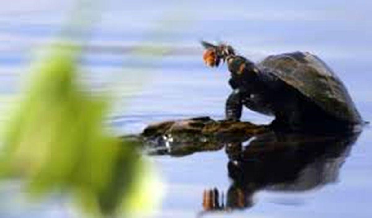 فیلم تمساح خبر ساز دریاچه چیتگر+ جزئیات